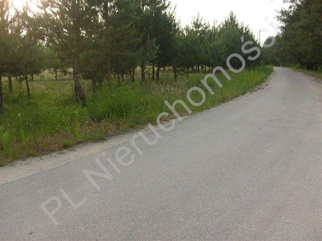 Działka rolna na sprzedaż Stare Budy  43400m2 Foto 2