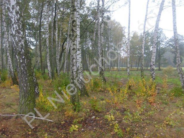 Działka rolna na sprzedaż Stare Budy  4239m2 Foto 1