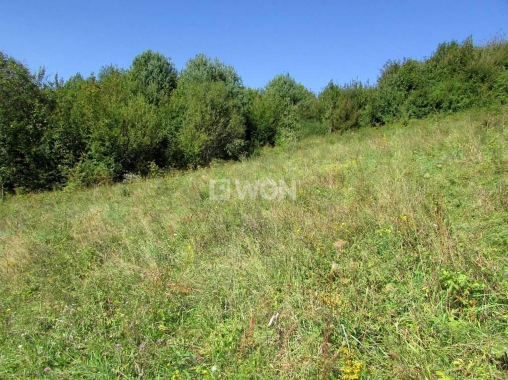 Działka inwestycyjna na sprzedaż Krzywe, Krzywe, Krzywe  31100m2 Foto 6