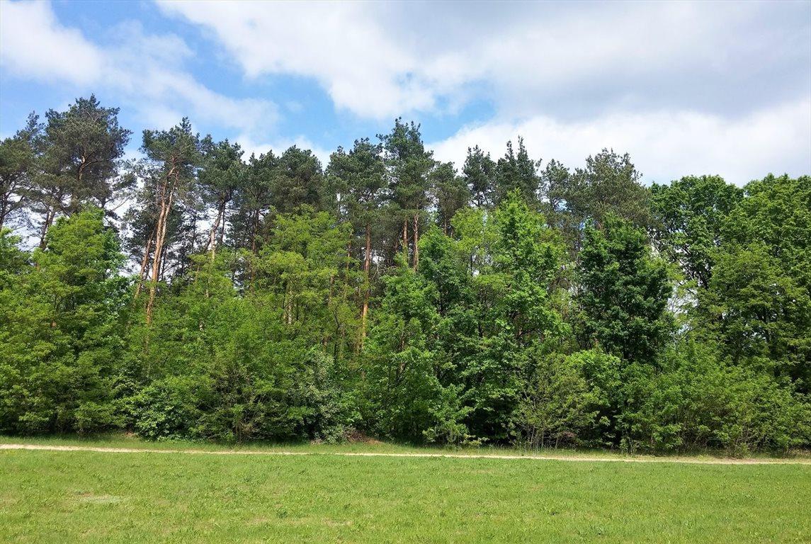 Działka leśna na sprzedaż Stary Kraszew  18100m2 Foto 8