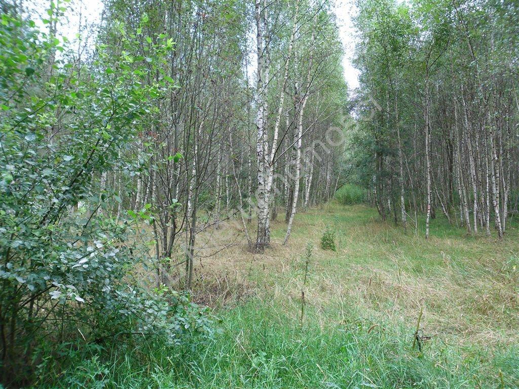 Działka leśna na sprzedaż Izabelin  27242m2 Foto 7