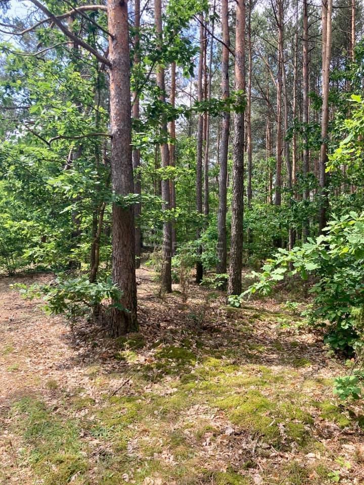 Działka leśna na sprzedaż Słupia  66300m2 Foto 2