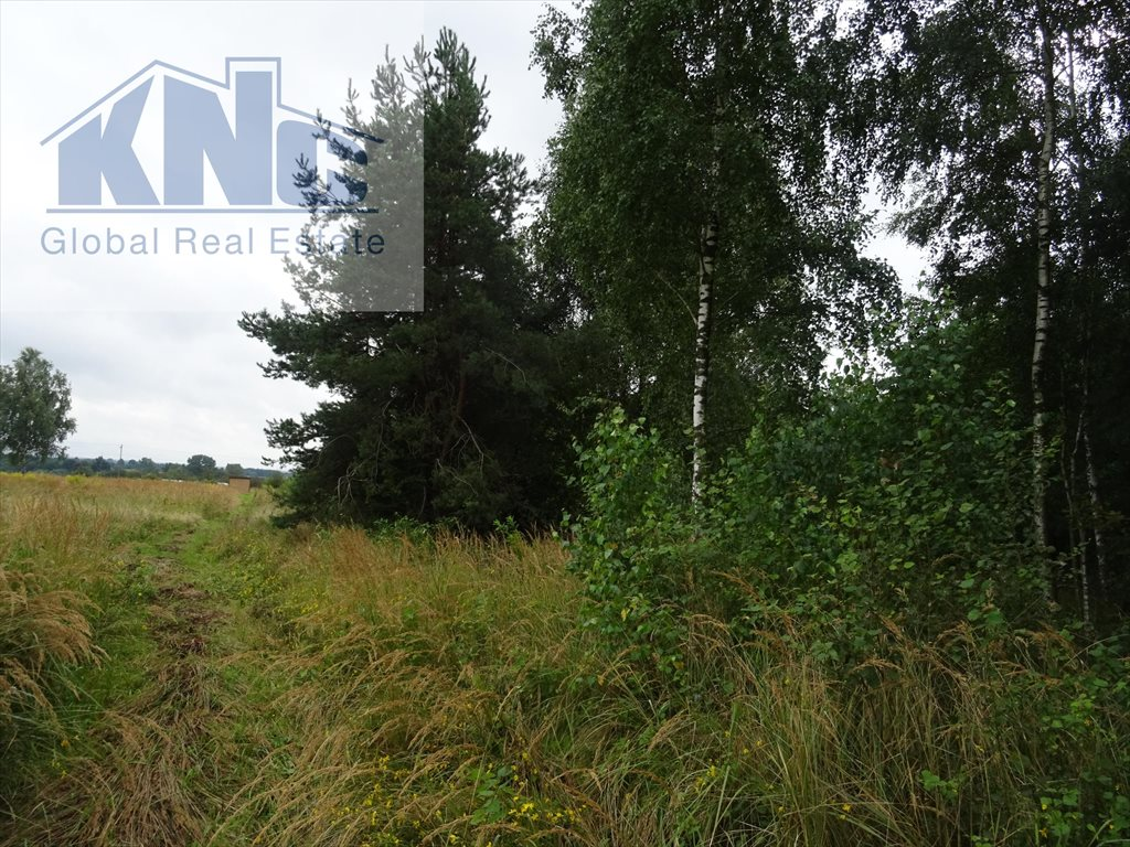 Działka rolna na sprzedaż Korytków  10800m2 Foto 5