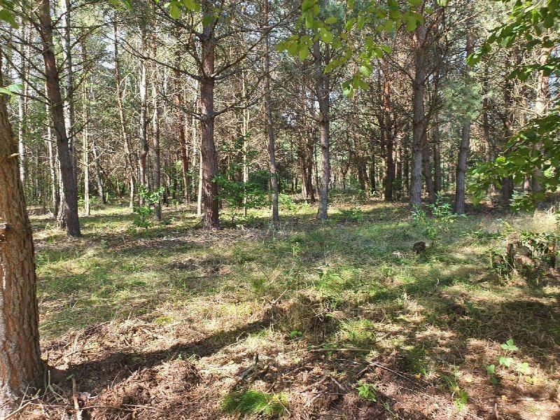 Działka leśna na sprzedaż KAMIENICA POLSKA, RUDNIK WIELKI  1958m2 Foto 3