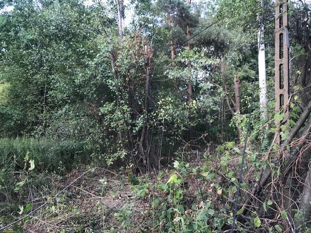 Działka leśna na sprzedaż Wiązowna  5700m2 Foto 1