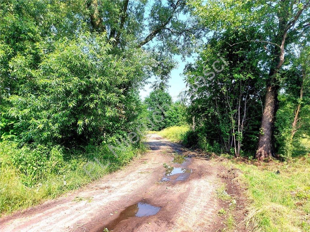 Działka rolna na sprzedaż Ruda  4516m2 Foto 1