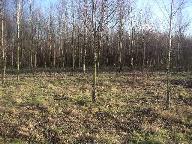 Działka leśna na sprzedaż Podrudzie  16568m2 Foto 1