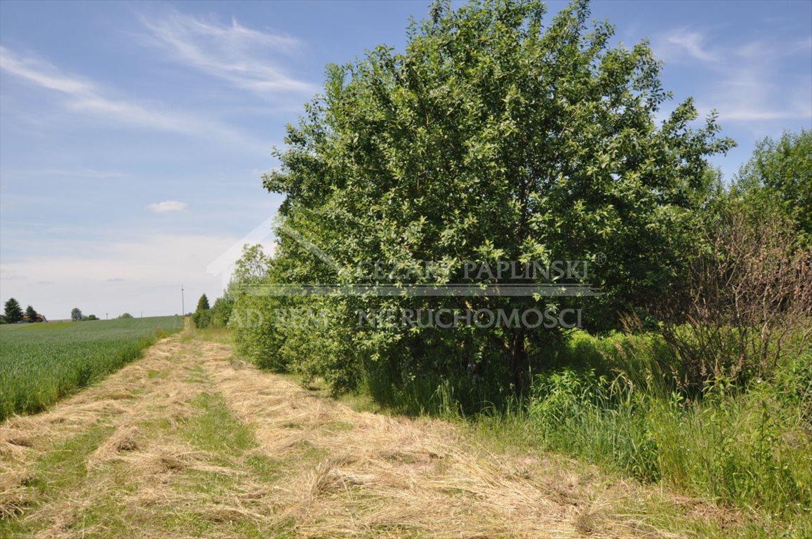 Działka rolna na sprzedaż Tomaszowice-Kolonia, Tomaszowice Kolonia  3000m2 Foto 3