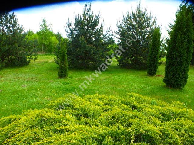 Dom na sprzedaż Piorunów  100m2 Foto 8