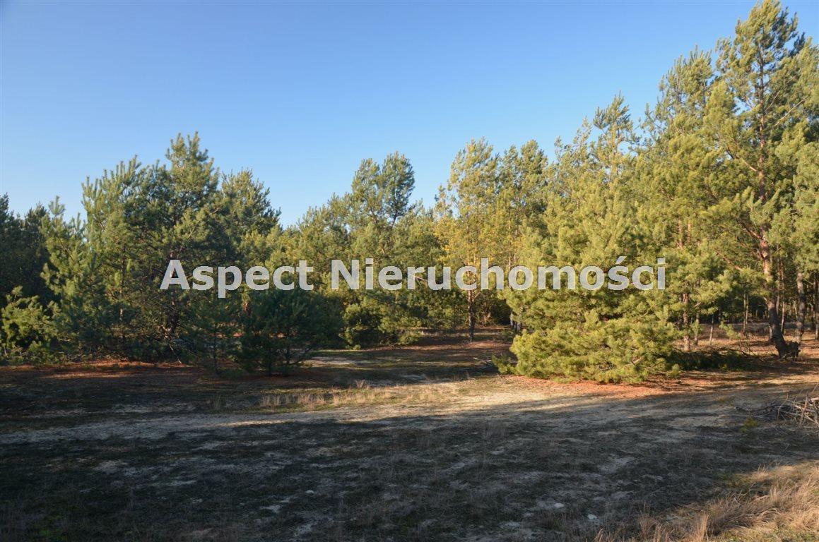 Działka leśna na sprzedaż Suchcice  12200m2 Foto 2