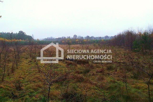 Działka leśna na sprzedaż Skwierawy  64900m2 Foto 8