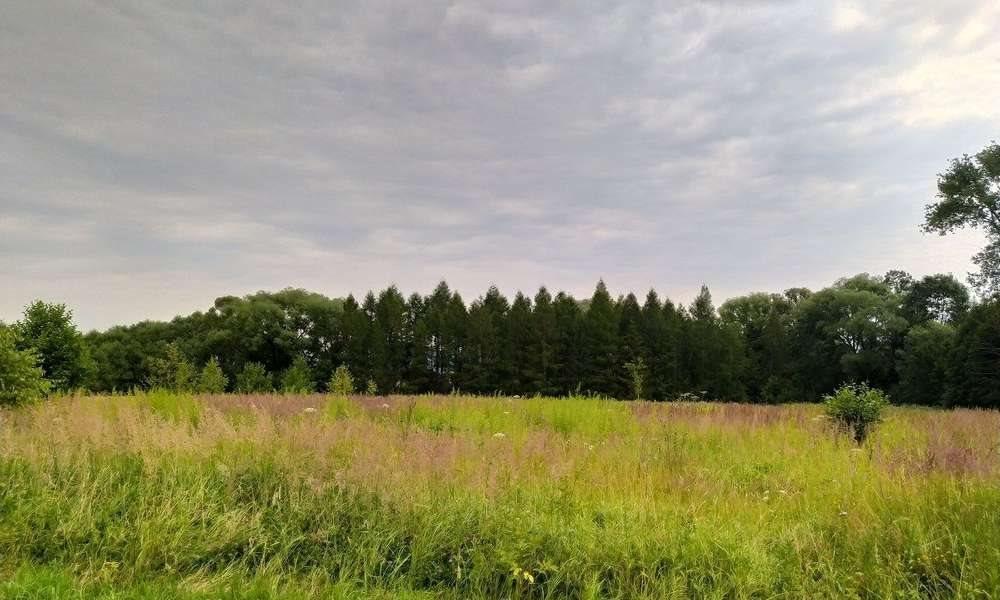 Działka rolna na sprzedaż Lipowa  7100m2 Foto 4