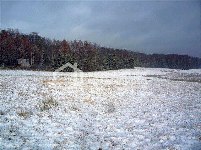 Działka budowlana na sprzedaż Nowa Wieś Przywidzka  11600m2 Foto 1