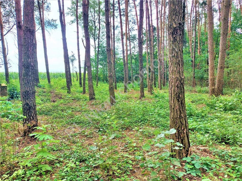 Działka rekreacyjna na sprzedaż Drożdżówka  1427m2 Foto 1