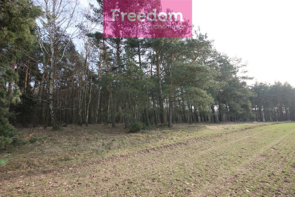 Działka leśna na sprzedaż Zielkowo  32200m2 Foto 9