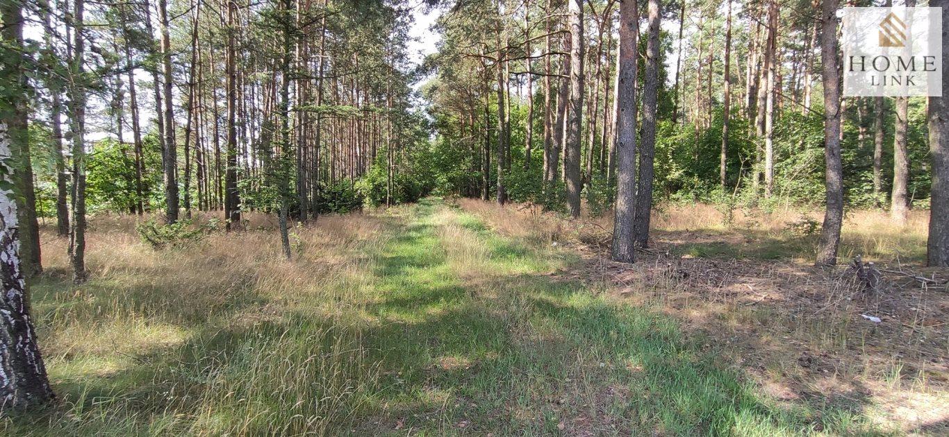 Działka leśna na sprzedaż Nowy Dwór  171900m2 Foto 5