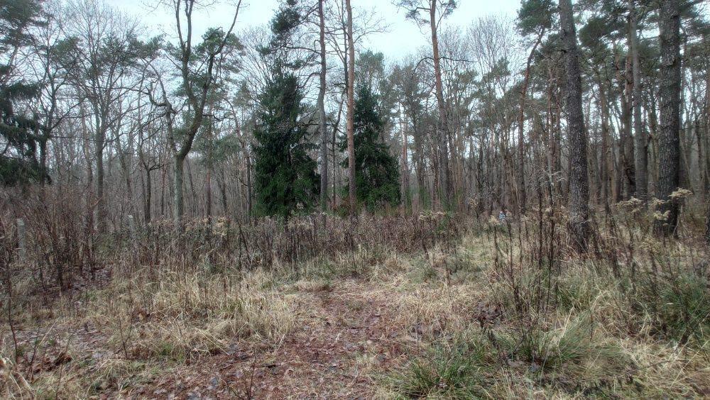 Działka leśna z prawem budowy na sprzedaż Warszawa, Wawer, Anin  2030m2 Foto 1