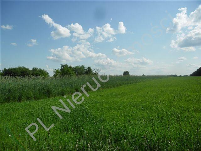 Działka rolna na sprzedaż Jeruzal  18000m2 Foto 2