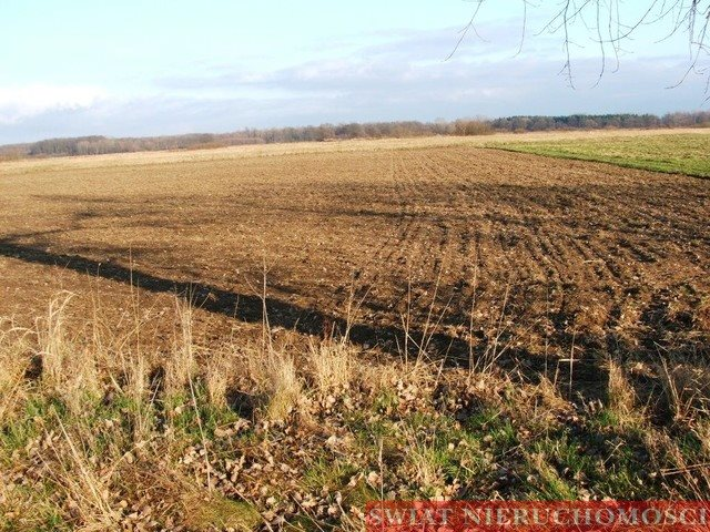 Działka rolna na sprzedaż Siedlce  12000m2 Foto 3