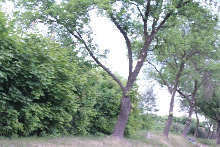 Działka rolna na sprzedaż Skotniki  17600m2 Foto 15
