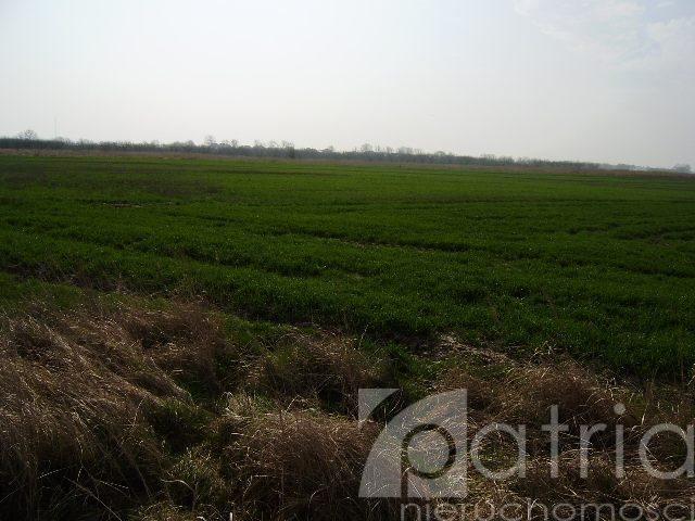 Działka rolna na sprzedaż Ustowo  20000m2 Foto 2