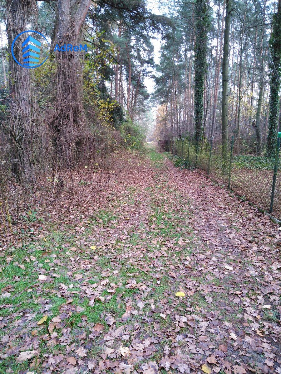Działka leśna na sprzedaż Jeziórko, Świerkowa  5000m2 Foto 1