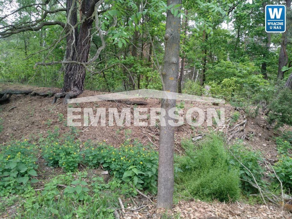 Działka leśna na sprzedaż Piaski Duchowne  5000m2 Foto 4