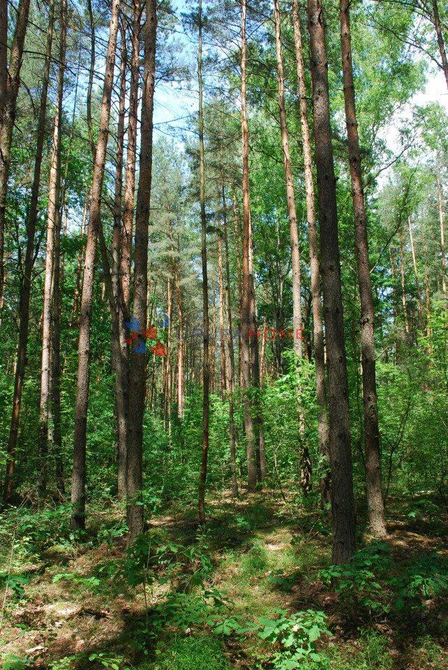Działka leśna z prawem budowy na sprzedaż Sękocin-Las  2300m2 Foto 6