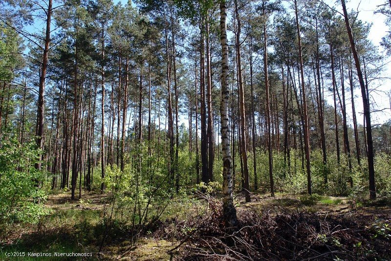 Działka leśna na sprzedaż Hornówek, Izabelin, oferta 2309  2000m2 Foto 1