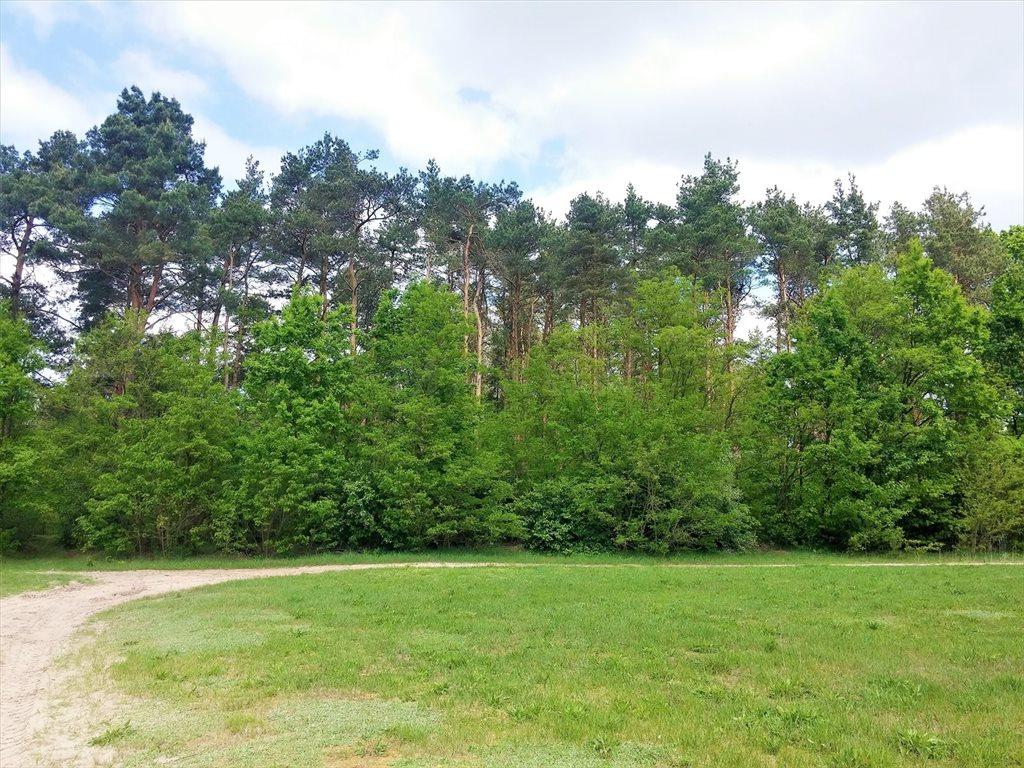 Działka leśna na sprzedaż Stary Kraszew  18100m2 Foto 2