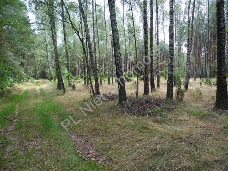 Działka leśna na sprzedaż Izabelin  27242m2 Foto 6