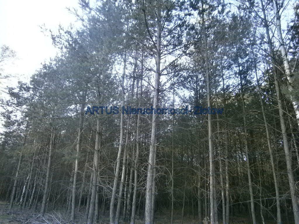 Działka leśna na sprzedaż Stara Wiśniewka  55661m2 Foto 1