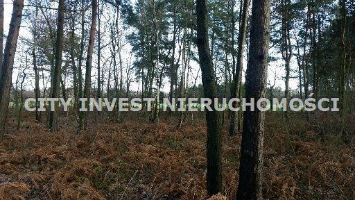 Działka leśna na sprzedaż Zielona Góra, Ochla  6650m2 Foto 3