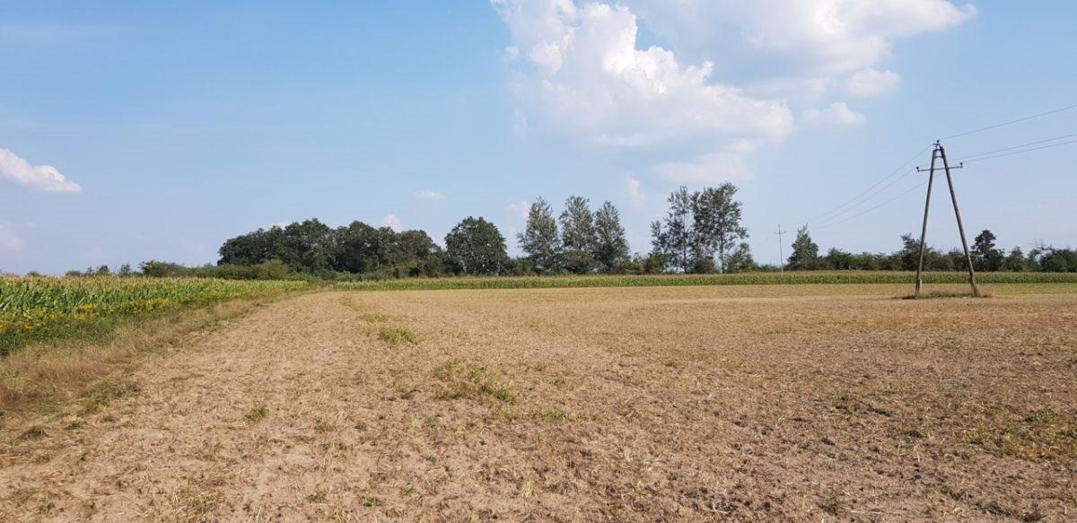 Działka rolna na sprzedaż Czernica  9534m2 Foto 6