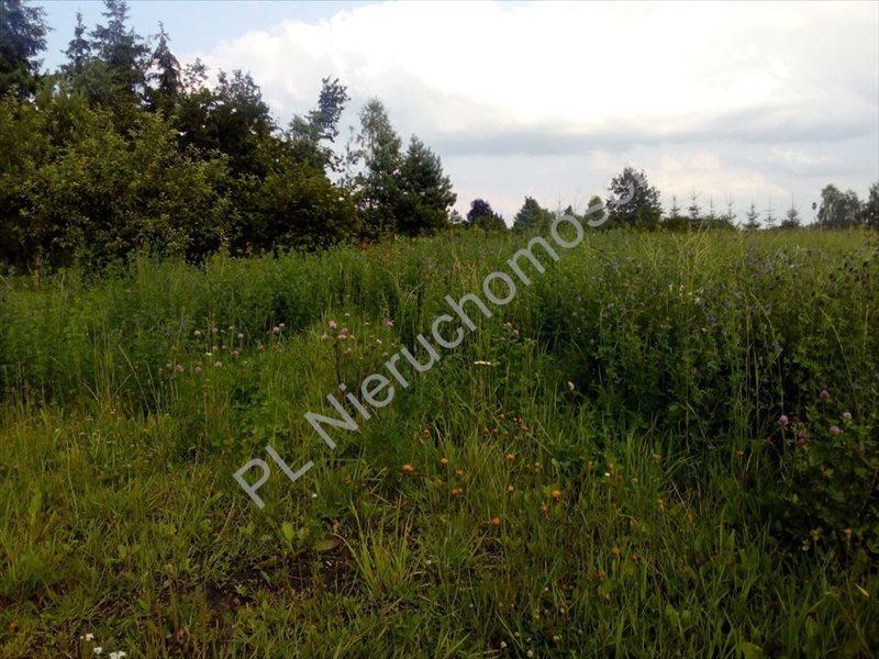 Działka rolna na sprzedaż Stanisławów  15500m2 Foto 2