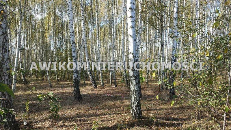 Działka rolna na sprzedaż Jaktorów, Międzyborów  4200m2 Foto 2