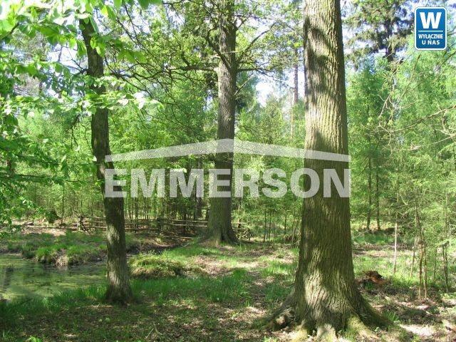 Działka leśna na sprzedaż Piaski Duchowne  5000m2 Foto 2