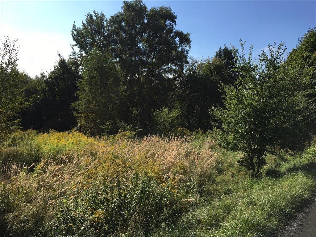 Działka rolna na sprzedaż Mikołów, Gniotek  2493m2 Foto 6