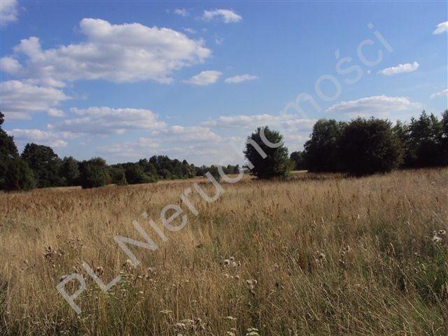 Działka rolna na sprzedaż Holendry Baranowskie  8300m2 Foto 5