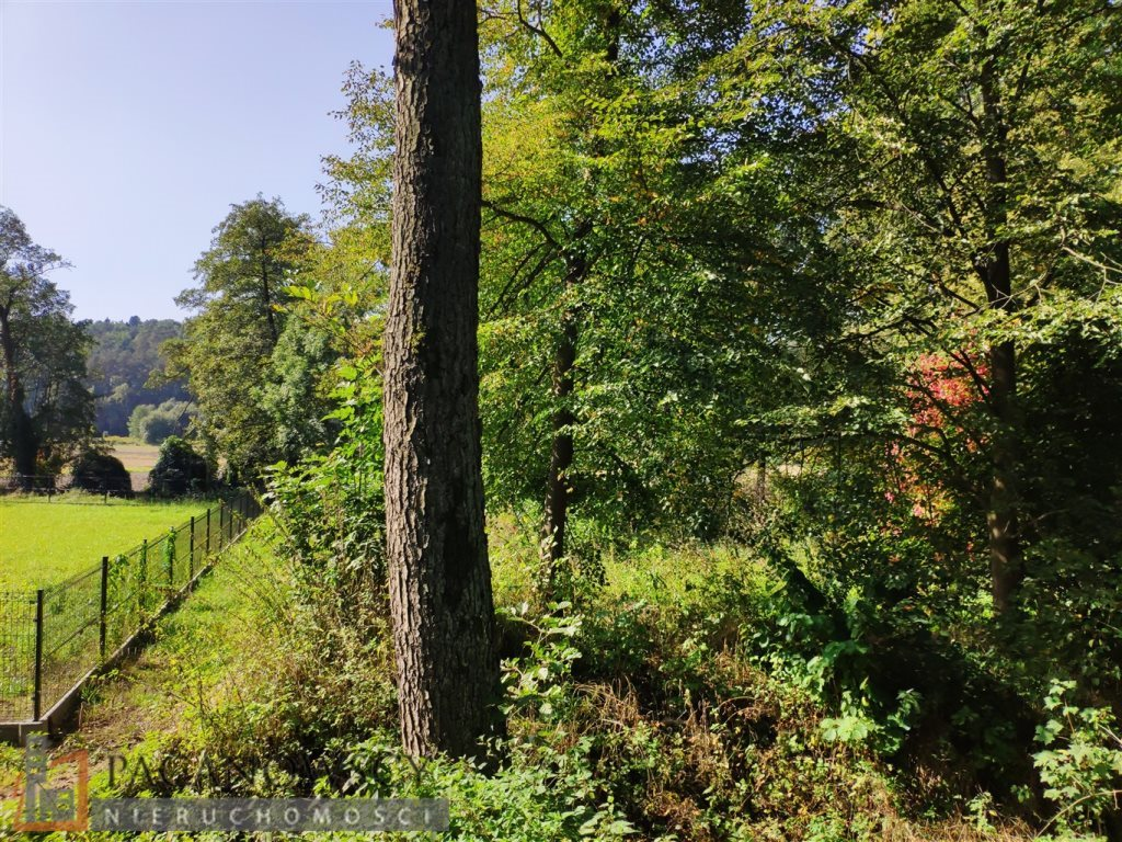 Działka leśna na sprzedaż Januszowice  4556m2 Foto 1