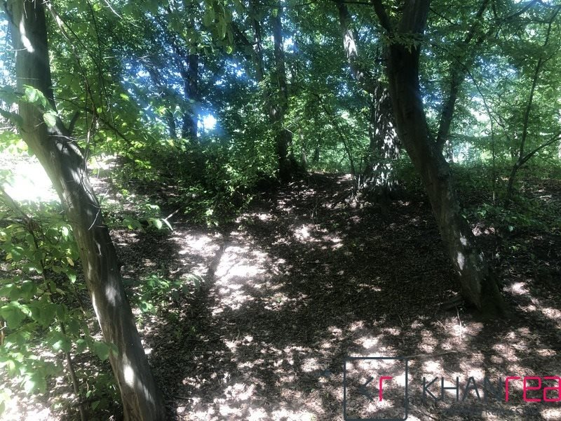 Działka leśna na sprzedaż Sobików  15000m2 Foto 7