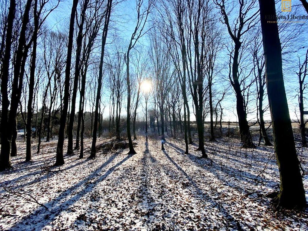 Działka leśna z prawem budowy na sprzedaż Konopnica  8900m2 Foto 3