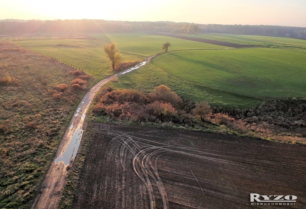 Działka rolna na sprzedaż Przęsocin  12800m2 Foto 3