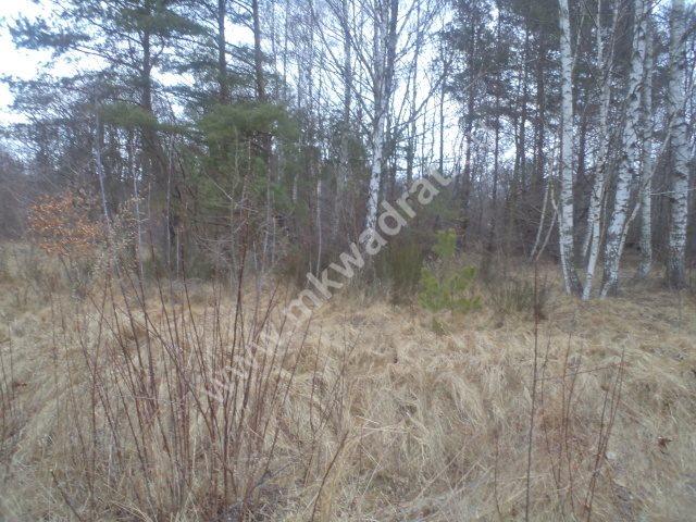 Działka leśna na sprzedaż Raducz  8600m2 Foto 3