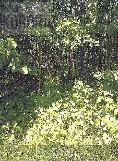 Działka leśna na sprzedaż Białystok, Dojlidy Górne  4322m2 Foto 3