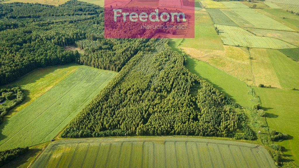 Działka leśna na sprzedaż Parys  93000m2 Foto 6