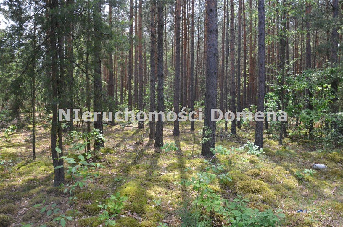 Działka leśna na sprzedaż Poświętne  11400m2 Foto 1