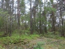 Działka leśna na sprzedaż Skroda Wielka  9200m2 Foto 6
