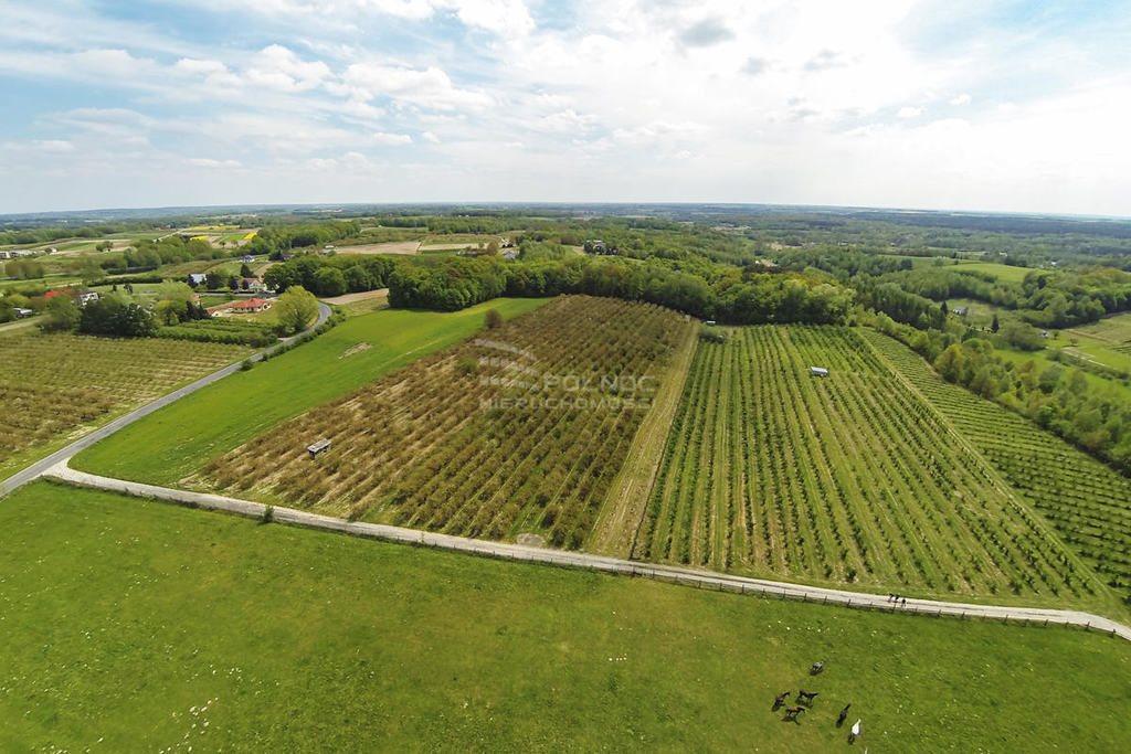 Działka rolna na sprzedaż Kazimierz Dolny, Wylągi  21600m2 Foto 8