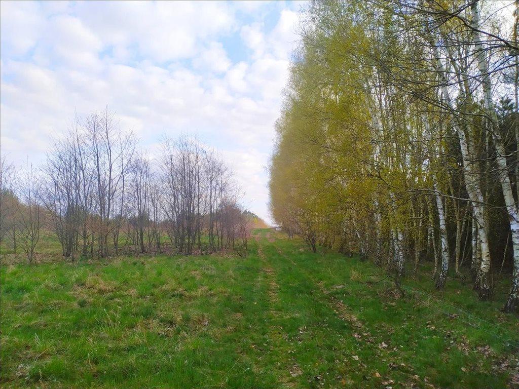 Działka rolna na sprzedaż Rościsławice, Oborniki Śląskie  15861m2 Foto 3